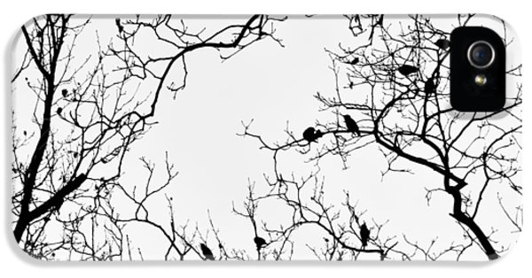 Branches And Birds IPhone 5 / 5s Case by Sandy Taylor