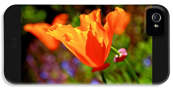 Brilliant Spring Poppies IPhone 5 / 5s Case by Rona Black