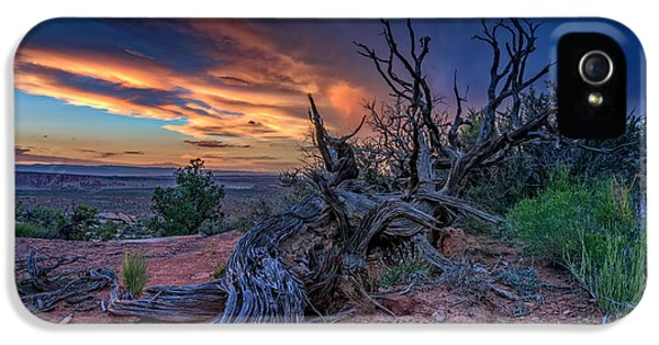 American Western iPhone 5 Cases - Bristlecone Sunset iPhone 5 Case by Rick Berk