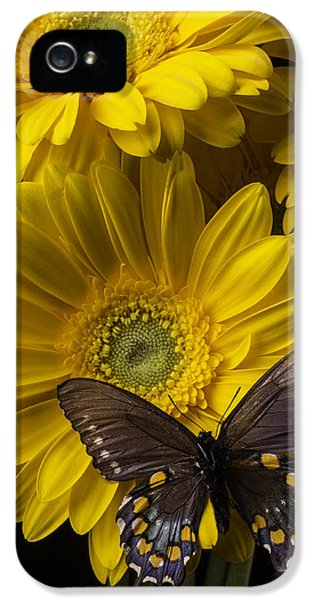 Softly iPhone 5 Cases - Brown Butterfly On Yellow Daisies  iPhone 5 Case by Garry Gay