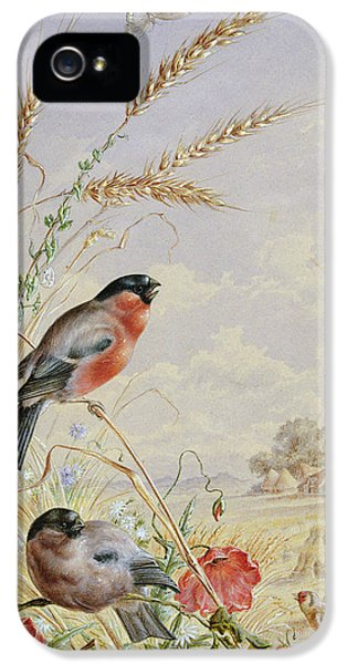 Bullfinches In A Harvest Field IPhone 5 / 5s Case by Harry Bright