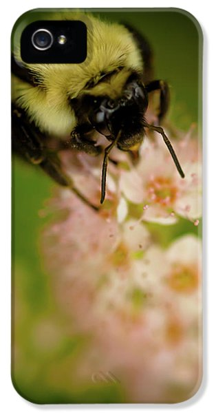 Bee iPhone 5 Cases - Busy Bee iPhone 5 Case by Sebastian Musial