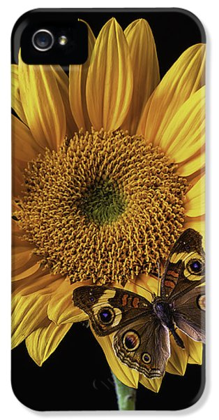 Softly iPhone 5 Cases - Butterfly Eyes iPhone 5 Case by Garry Gay