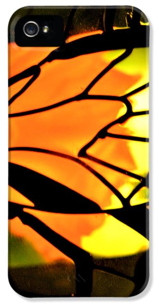 Down In The Garden iPhone 5 Cases - Butterfly Florals  Collection C iPhone 5 Case by Debra     Vatalaro