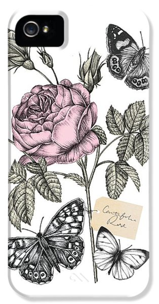 Cabbage Rose IPhone 5 / 5s Case by Stephanie Davies