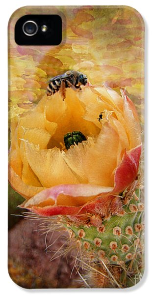 Prickly Rose iPhone 5 Cases - Cactus Spring Beauty w Frame iPhone 5 Case by Beverly Guilliams