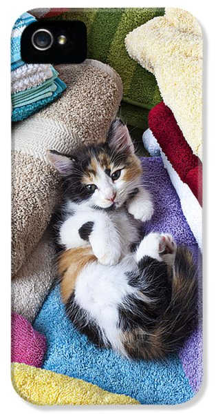 Washed iPhone 5 Cases - Calico kitten on towels iPhone 5 Case by Garry Gay