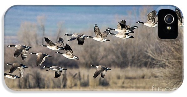 Canada  Geese Flock IPhone 5 / 5s Case by Mike Dawson