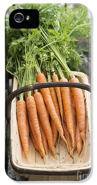 Carrot iPhone 5 Cases - Carrots iPhone 5 Case by Tim Gainey