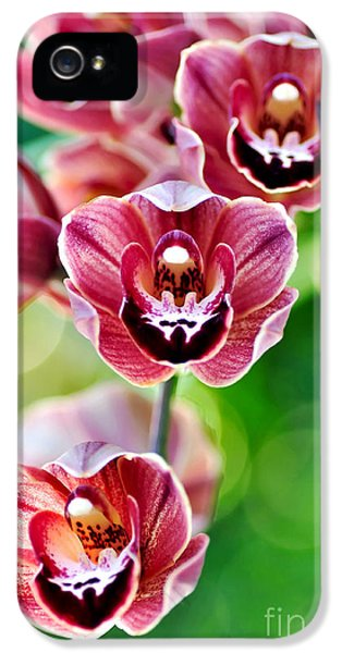 Cascading Miniature Orchids IPhone 5 / 5s Case by Kaye Menner