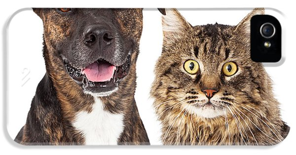 High Key iPhone 5 Cases - Cat and Dog Closeup iPhone 5 Case by Susan  Schmitz