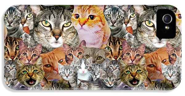 Cats IPhone 5 / 5s Case by Gloria Sanchez