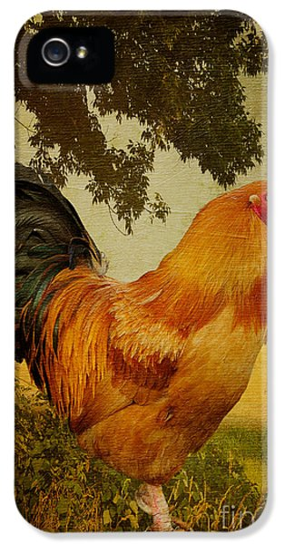 Chanticleer IPhone 5 / 5s Case by Lois Bryan