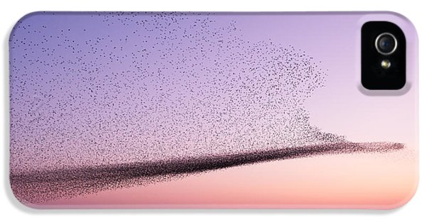 Chaos In Motion - Starling Murmuration IPhone 5 / 5s Case by Roeselien Raimond