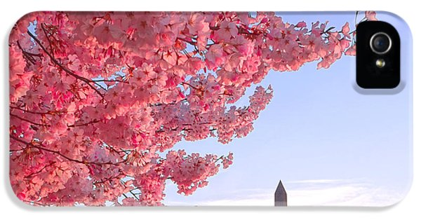 Cherry Tree And The Washington Monument  IPhone 5 / 5s Case by Olivier Le Queinec