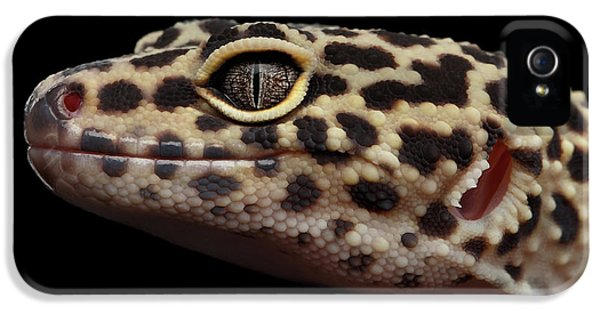 Close-up Leopard Gecko Eublepharis Macularius Isolated On Black Background IPhone 5 / 5s Case by Sergey Taran