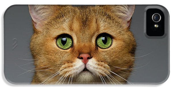 Closeup Golden British Cat With  Green Eyes On Gray IPhone 5 / 5s Case by Sergey Taran
