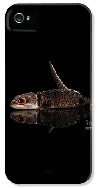 Closeup Red-eyed Crocodile Skink, Tribolonotus Gracilis, Isolated On Black Background IPhone 5 / 5s Case by Sergey Taran
