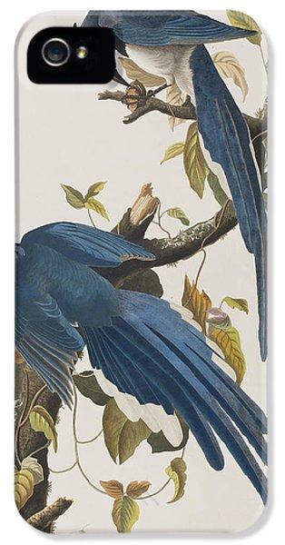 Columbia Jay IPhone 5 / 5s Case by John James Audubon