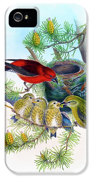 Common Crossbill Antique Bird Print John Gould Hc Richter Birds Of Great Britain  IPhone 5 / 5s Case by John Gould - HC Richter