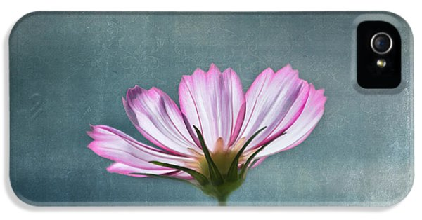 Pink Flowers iPhone 5 Cases - Cosmos - Summer Love iPhone 5 Case by Kim Hojnacki