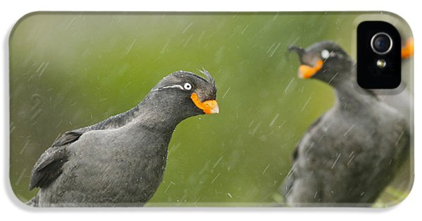 Crested Auklets IPhone 5 / 5s Case by Desmond Dugan/FLPA