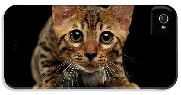 Crouching Bengal Kitty On Black  IPhone 5 / 5s Case by Sergey Taran