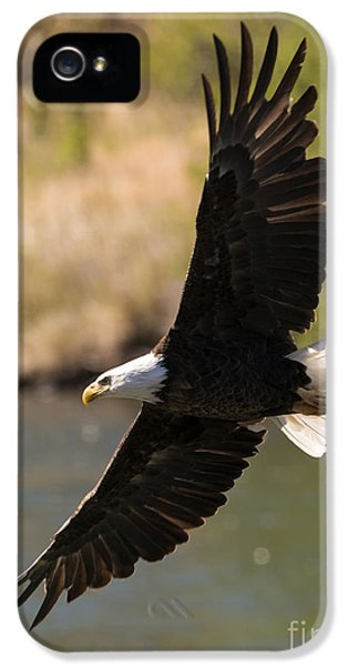 American Bald Eagle iPhone 5 Cases - Cruising the River iPhone 5 Case by Mike Dawson