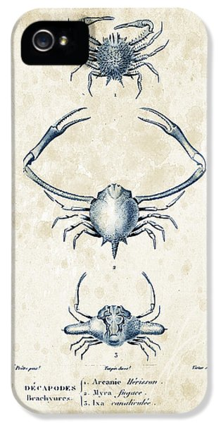Crab iPhone 5 Cases - Crustaceans - 1825 - 26 iPhone 5 Case by Aged Pixel