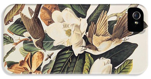 Cuckoo On Magnolia Grandiflora IPhone 5 / 5s Case by John James Audubon