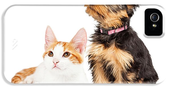 High Key iPhone 5 Cases - Cute Puppy and Kitten Sitting to Side  iPhone 5 Case by Susan  Schmitz