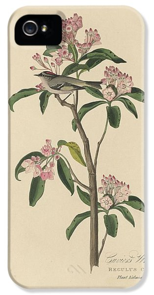 Cuvier's Wren IPhone 5 / 5s Case by John James Audubon
