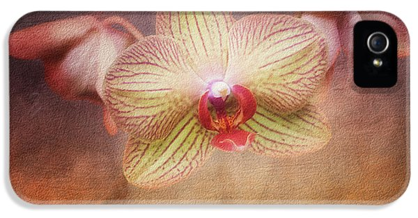 Cymbidium Orchid IPhone 5 / 5s Case by Tom Mc Nemar