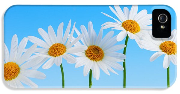 Flower iPhone 5 Cases - Daisy flowers on blue background iPhone 5 Case by Elena Elisseeva
