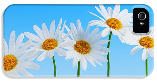 Blooming iPhone 5 Cases - Daisy flowers on blue iPhone 5 Case by Elena Elisseeva