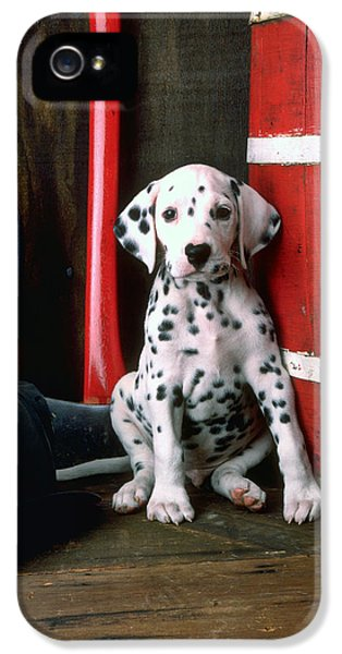 Dalmatian Puppy With Fireman's Helmet  IPhone 5 / 5s Case by Garry Gay