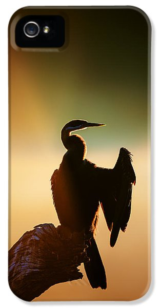 Backlight iPhone 5 Cases - Darter Bird with misty sunrise iPhone 5 Case by Johan Swanepoel