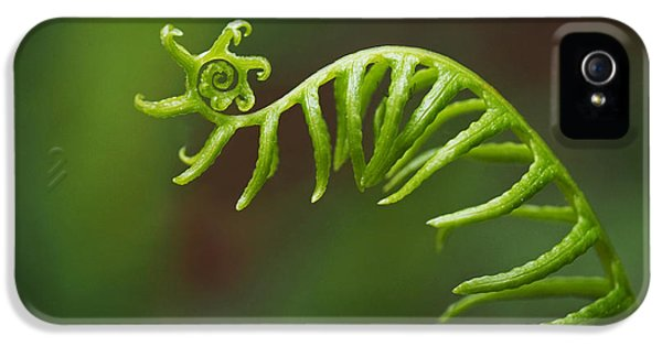 Fern iPhone 5 Cases - Delicate Fern Frond Spiral iPhone 5 Case by Rona Black
