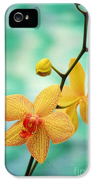 Dendrobium IPhone 5 / 5s Case by Allan Seiden - Printscapes