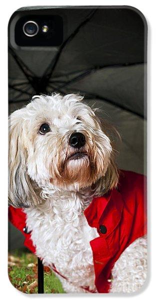 Clothing iPhone 5 Cases - Dog under umbrella iPhone 5 Case by Elena Elisseeva