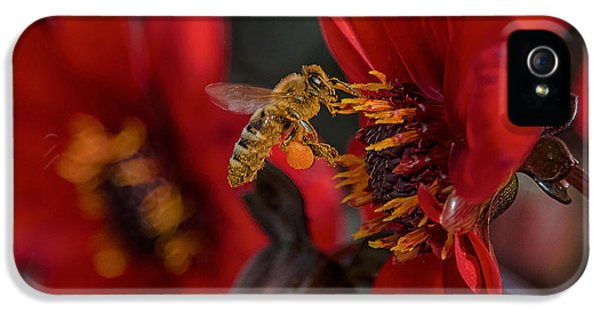 Bee iPhone 5 Cases - Doing His Bees-ness iPhone 5 Case by Bill Roberts