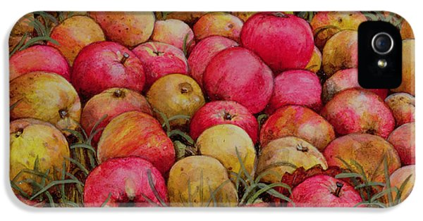 Durnitzhofer Apples IPhone 5 / 5s Case by Ditz