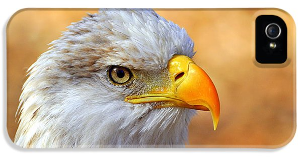 American Bald Eagle iPhone 5 Cases - Eagle 7 iPhone 5 Case by Marty Koch
