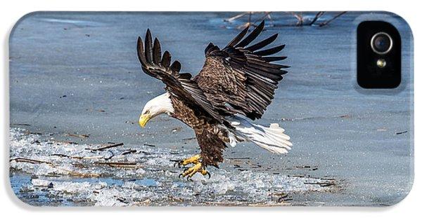 Bird Watcher iPhone 5 Cases - Eagle Landing iPhone 5 Case by Paul Freidlund