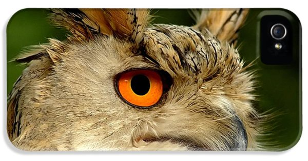 Prey iPhone 5 Cases - Eagle Owl iPhone 5 Case by Photodream Art
