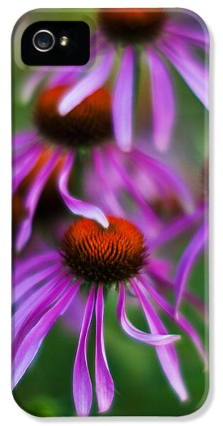 Echinacea iPhone 5 Cases - Echinacea Crowd iPhone 5 Case by Mike Reid