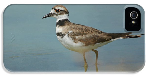 Elegant Wader IPhone 5 / 5s Case by Fraida Gutovich