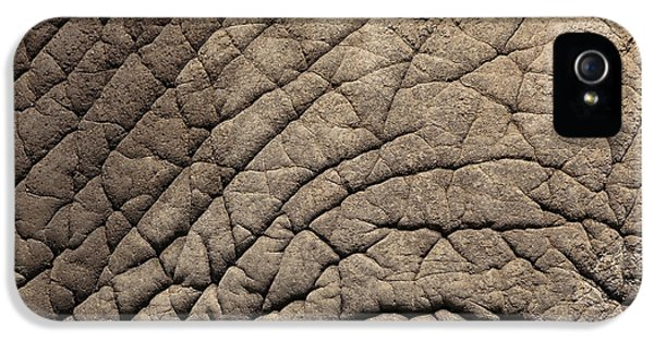 Zoo iPhone 5 Cases - Elephant Skin Background iPhone 5 Case by Edward Fielding