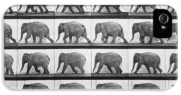 Elephant Walking IPhone 5 / 5s Case by Eadweard Muybridge
