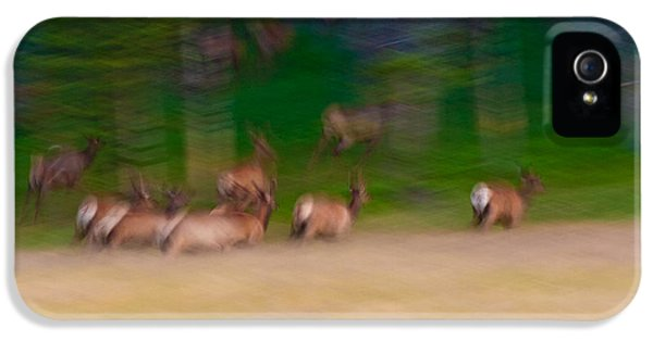Blur iPhone 5 Cases - Elk on the Run iPhone 5 Case by Sebastian Musial